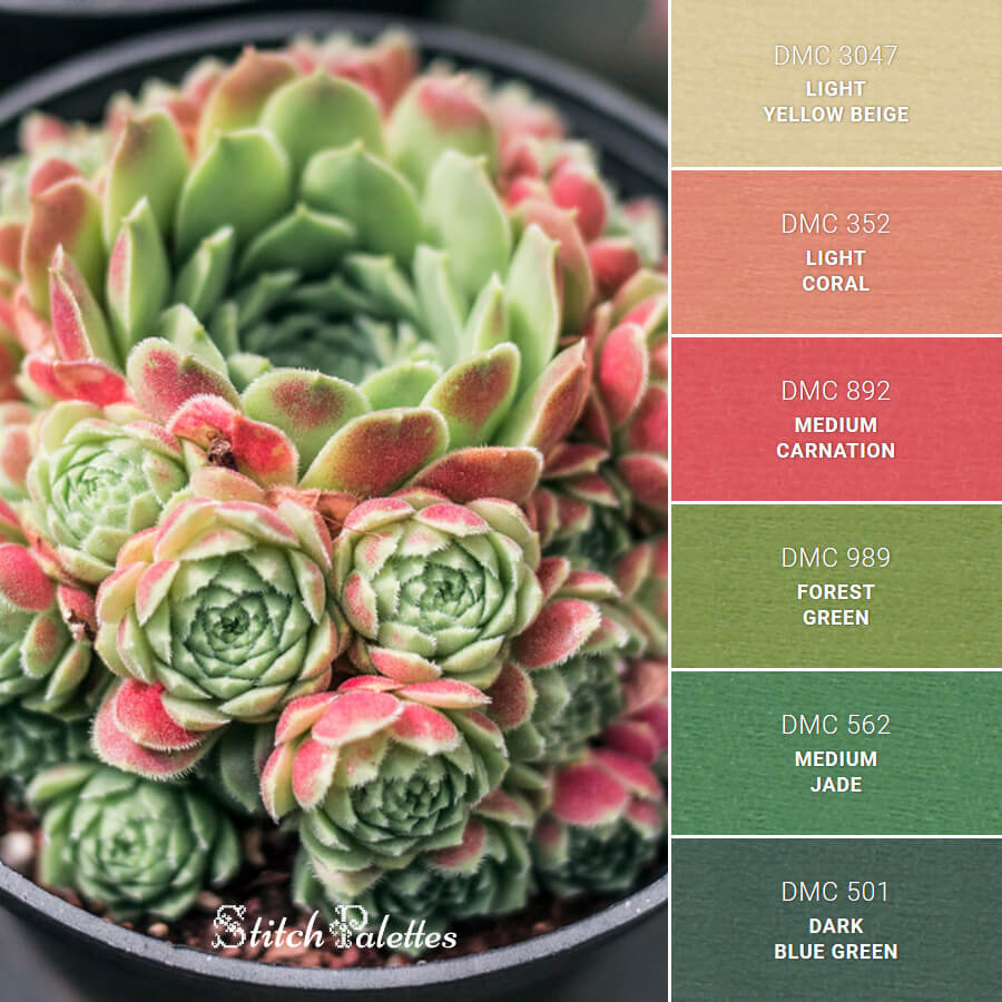 Green & Red Succulent