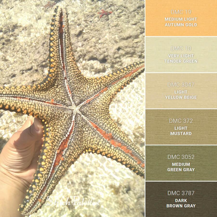 Stitch Palette SPA0186: Starfish Splendor
