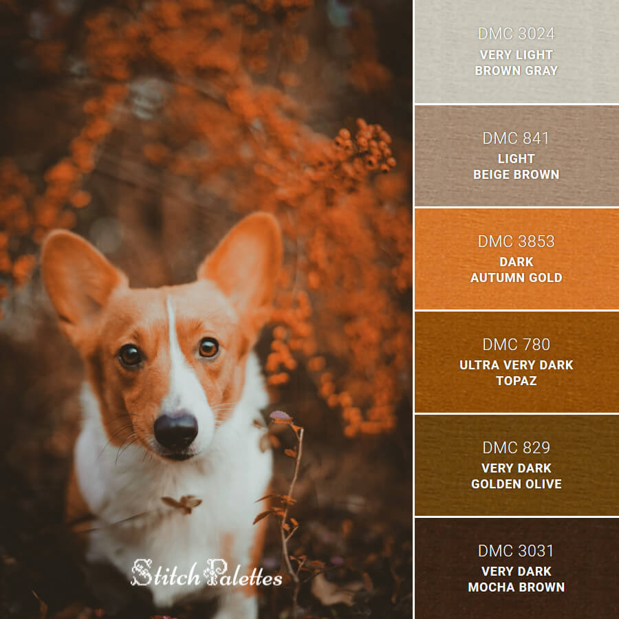 Corgi Colors