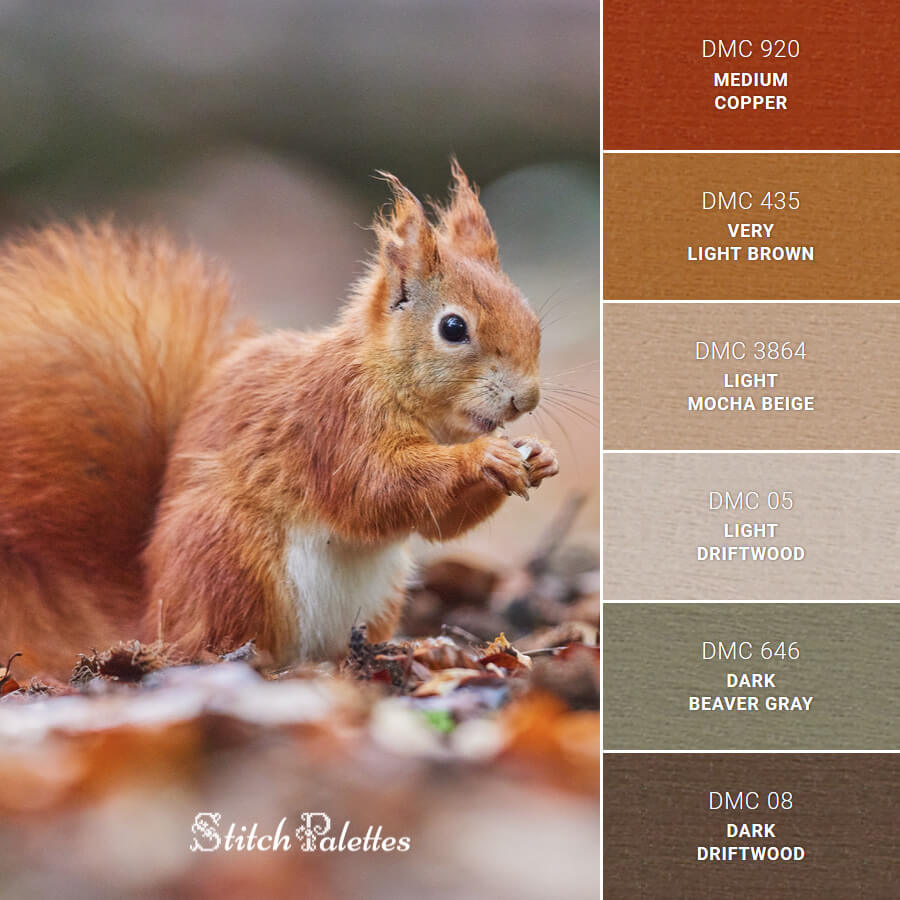 Stitch Palette SPA0478: Squirrel Scavenger