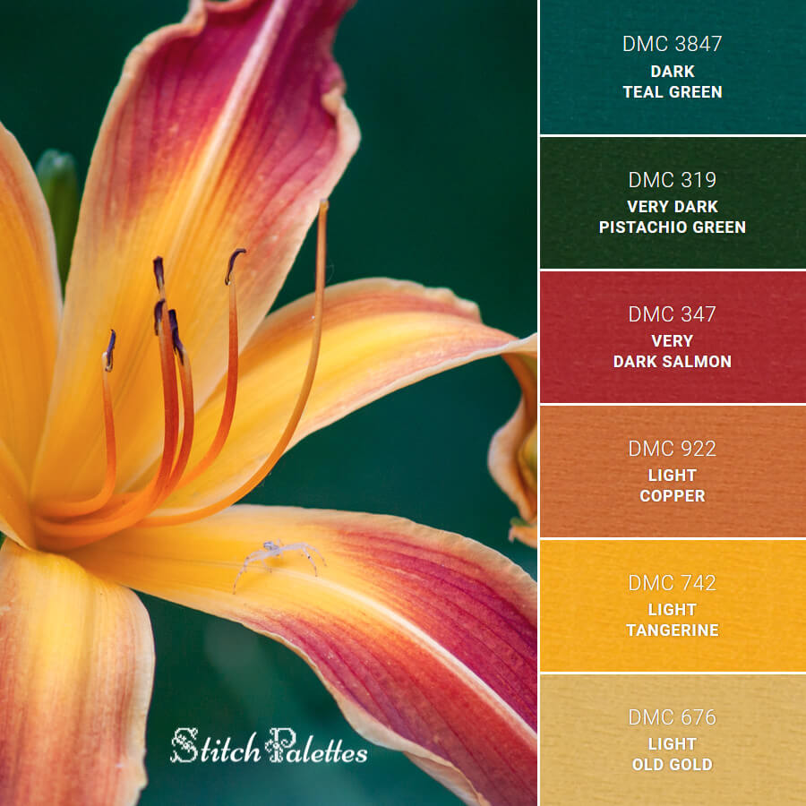 Stitch Palette SPA0487: Daylily With Spider