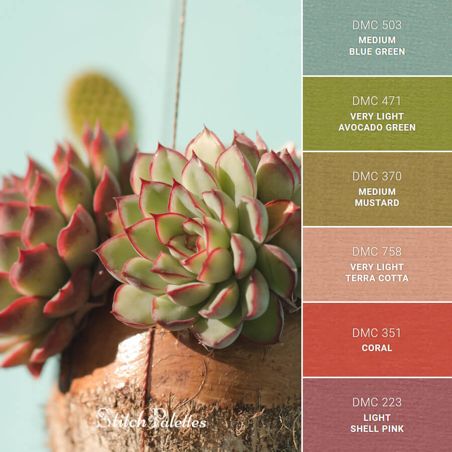 A Focus On Succulents