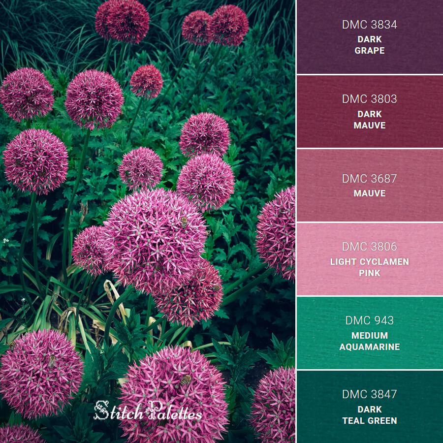 Allium In Bloom