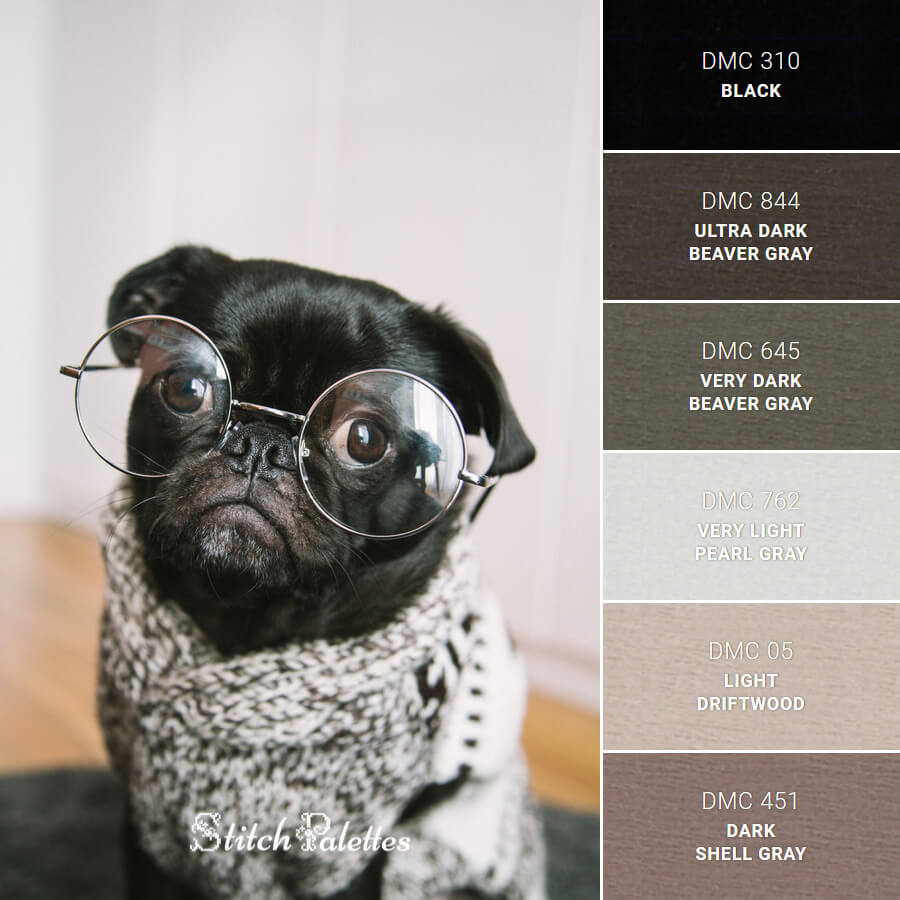 Black Pug Intellect