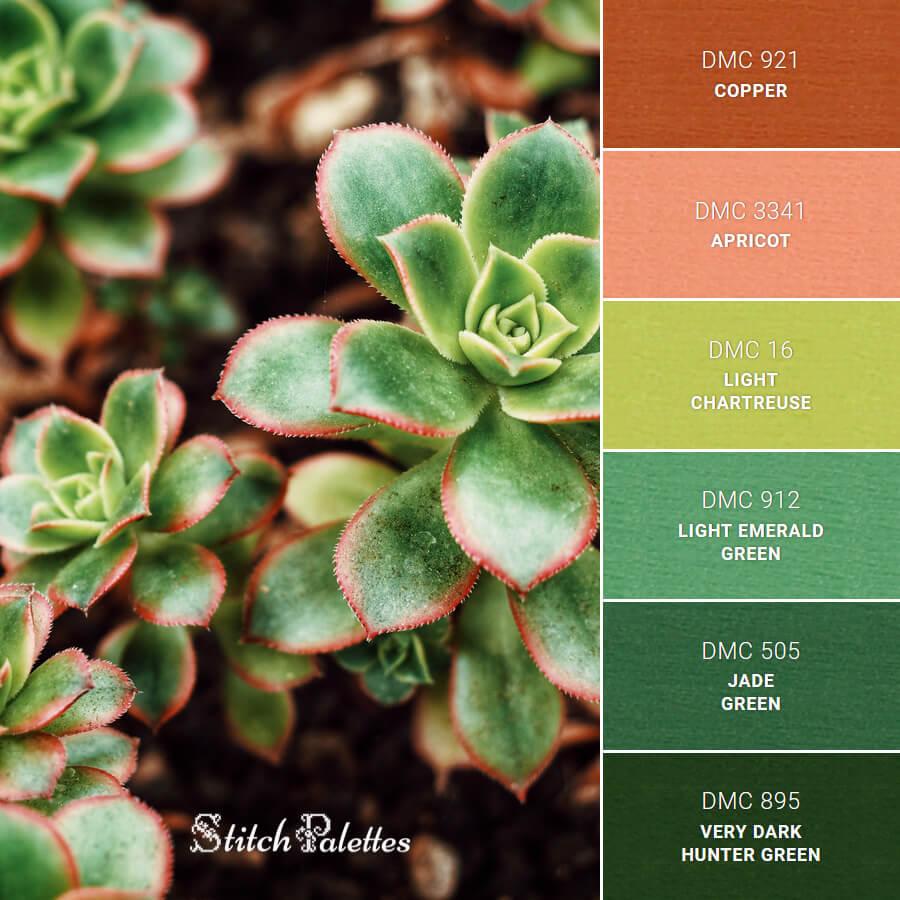 Focus On Succulents