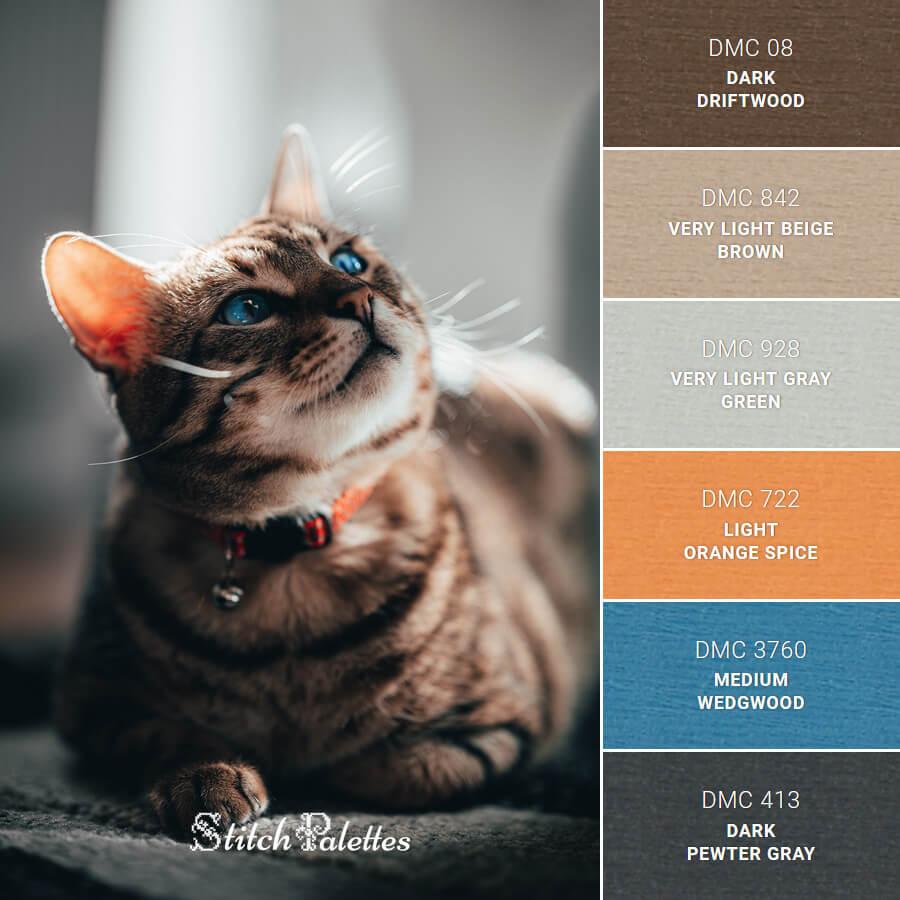 Curious Brown Cat