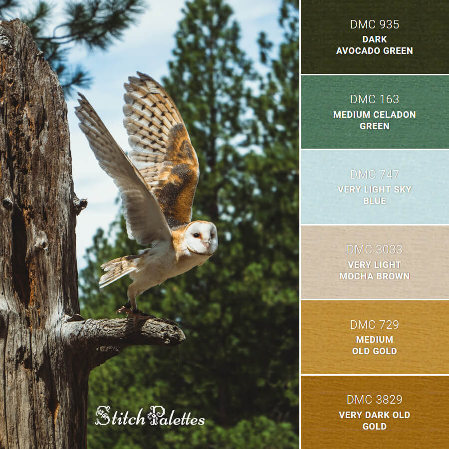 Owl At High Desert Museum