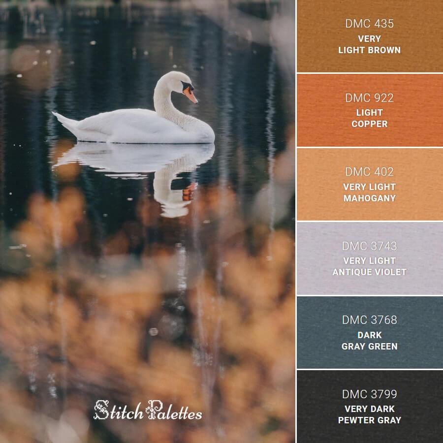 Calm White Swan
